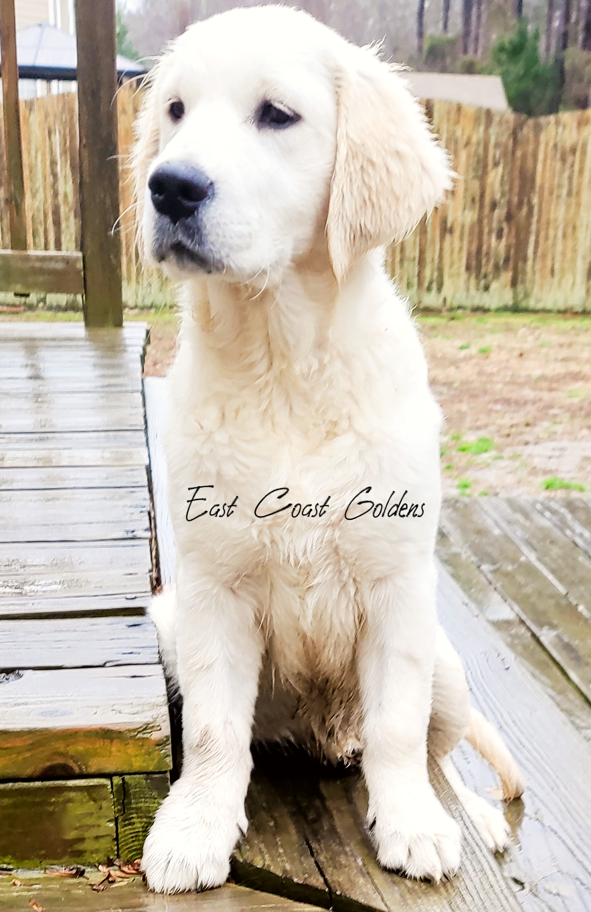 puppy for sale near me