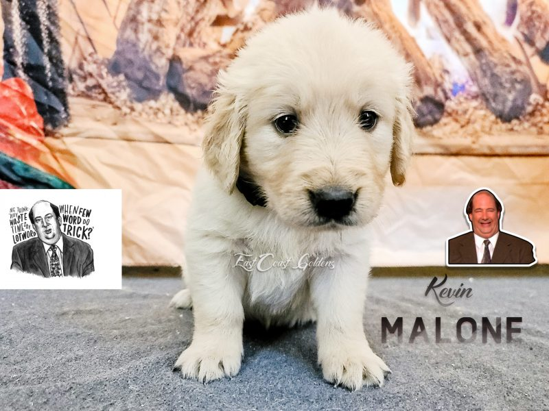 Kevin Malone - 5 Weeks Old